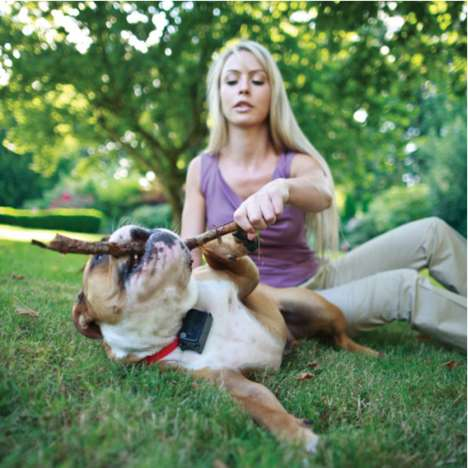 Higher-Intensity Dog Barriers