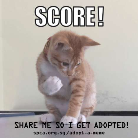Meme Adoption Campaigns - Singapore's 'Adopt a Meme' Turns Adoptable Animals into Memes