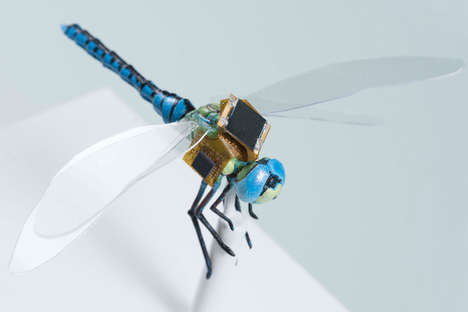 Living Micro-Drones - Scientists Have Melded Technology and Dragonflies to Make Controllable Drones