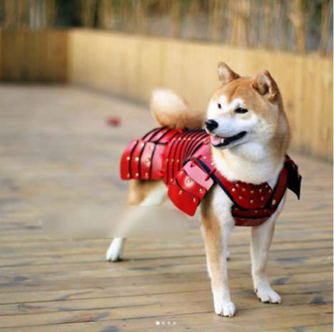 Pet Samurai Armor - Samurai Age Has Created a Line of Armor for Dogs and Cats
