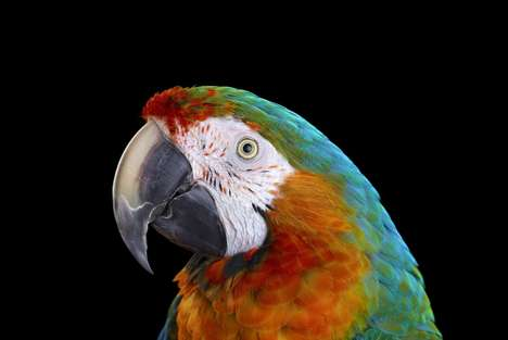 Colorful Parrot Portraiture