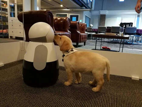 Pet Recognition Robots - The Kuri Robot Can Now Recognizes When Dogs and Cats are in View