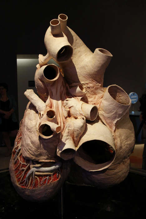 Anatomical Whale Heart Exhibitions - The ROM's Newest Exhibition Features the World's Largest Heart