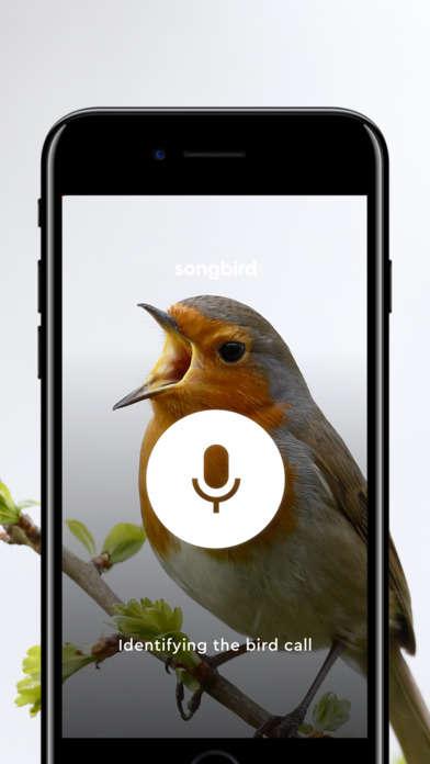 Birdsong Identification Apps