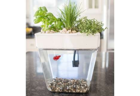 Self-Cleaning Green Fish Tanks - 'Back to the Roots' Water Garden Grows Organic Herbs and Sprouts