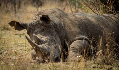 Anti-Poaching Sensors - This Animal Poaching Prevention Effort Uses IoT and LPWAN Technologies