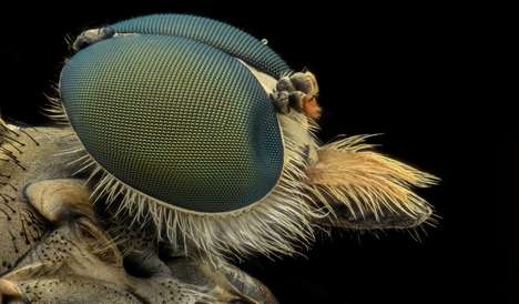 Insect-Inspired Solar Cells - Stanford Scientists Designed a Solar Panel Cell Modeled After Bug Eyes