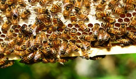 Honeybee-Monitoring Backpacks