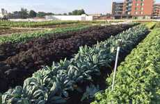 Rooftop Grocer Gardens - The Grocery Store IGA Has Introduced a Rooftop Garden