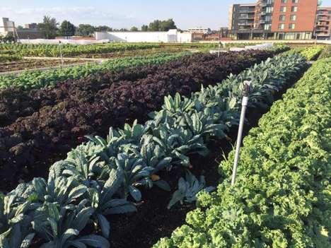 Rooftop Grocer Gardens