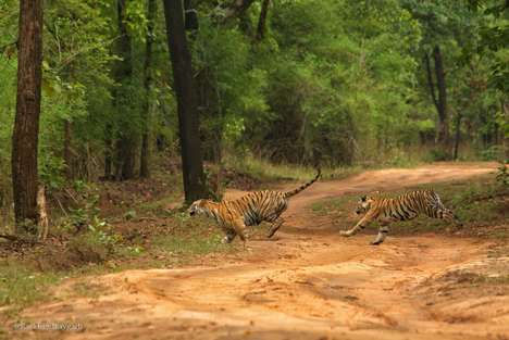 Indian Wildlife Apps - 'WildTrails India' Recommends the Best Wildlife Tours Throughout the Country