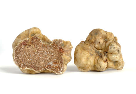 Massive Luxurious Truffles - This Truffle Sold for $87,400 at the World Alba White Truffle Auction