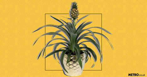 Affordable Home Pineapple Plants - Asda is Selling an Inexpensive, Oxygen-Generating Pineapple Plant
