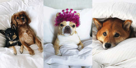 Pet Influencer Linen Campaigns - Brooklinen Crowd Sourced Images from Instagram-Famous Pets