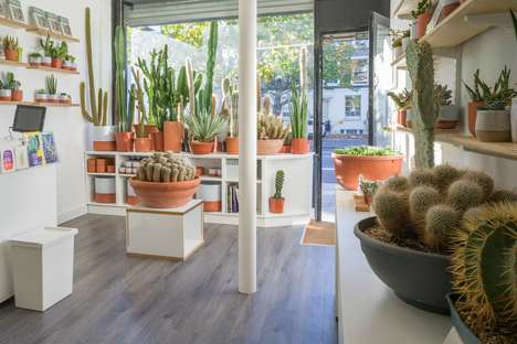 Fashionable Succulent Shops