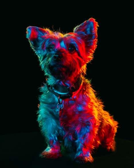 Adoptable Dog Photo Series