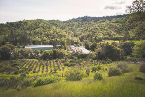 Cannabis-Transformed Wineries