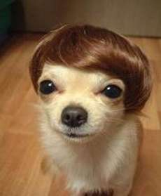 15 Weird Wigs and Terrible Toupees