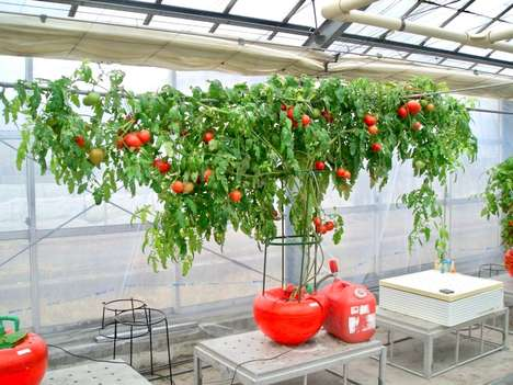 Accelerated Growth Farming Systems - The 'KANA-chan' Hydroponic Oxygen System is Efficient