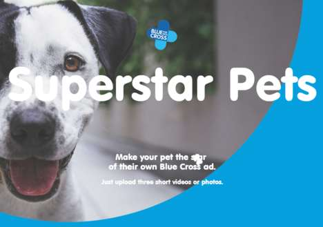 Celebratory Pet Apps
