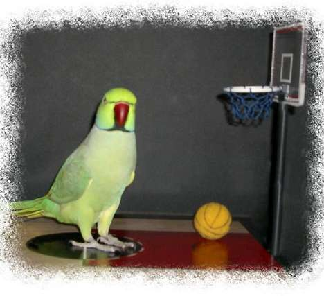 Basketball Playing Birds