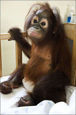 Primate Hospital Patients Are Ridiculously Cute