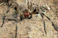 Lethal Spiders in Grocery Stores