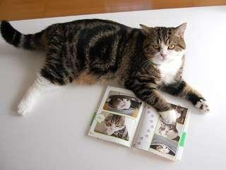Feline Cardboard Fun