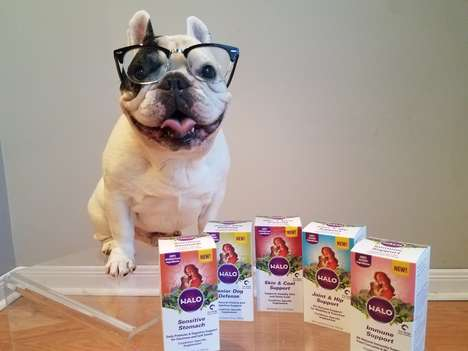 Condition-Specific Dog Supplements - Halo's Supplemental Foods for Pets Support Healthy Aging