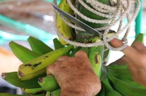 Banana Flour Yogurts