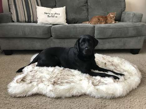 Rug-Shaped Dog Begs - Treat A Dog's PupRug is a Memory Foam Bed Disguised as a Home Decor Accessory