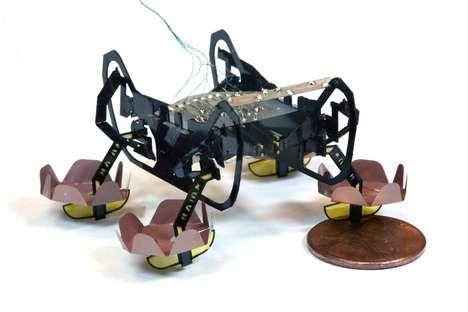 Amphibious Underwater Robots