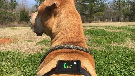 Temperature-Sensing Dog Harnesses