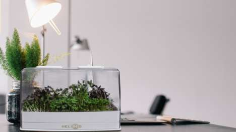 Indoor Microgreen Gardens