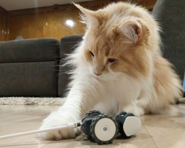 AI Powered Cat Toys : Petronics Mousr