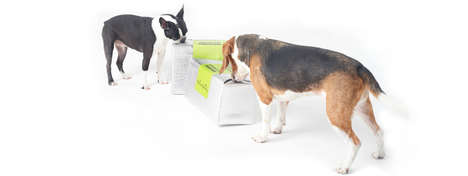 Organic Fresh Pet Foods - The Grateful Dog Creates Well Balanced Meals with Nutritious Ingredients