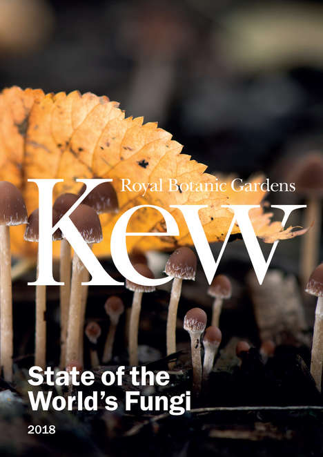 Plastic-Eating Fungi Breakthroughs - Kew Gardens Scientists Advocate for the Eco Value in Mushrooms