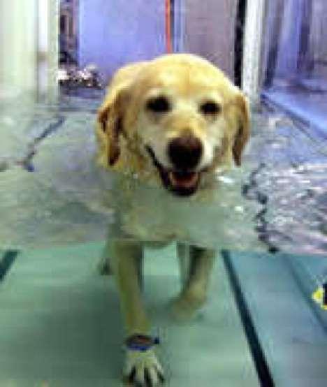Holistic Pet Care