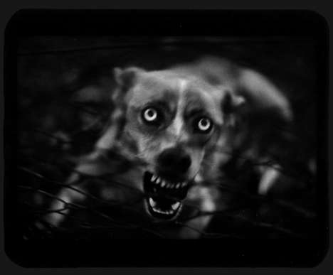 Giacomo Brunelli's Pictures of Mild Animals With Wild Expressions