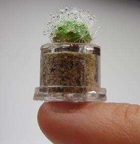 Tiny Capsulized Plants