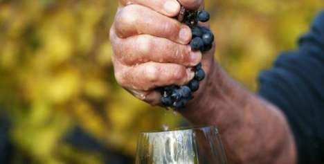 Natural Winemaking Courses