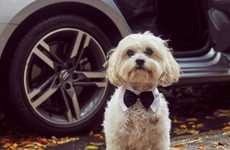 Luxe Pet Travelling Services