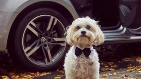 Luxe Pet Travelling Services - 'The Four Feet Fleet' Lets Pet Owners Travel in Style in Audis