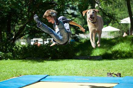 Playful Canine Trampoline Parks - Rover.com' Pushes Unconventional and Entertaining Dog Activities