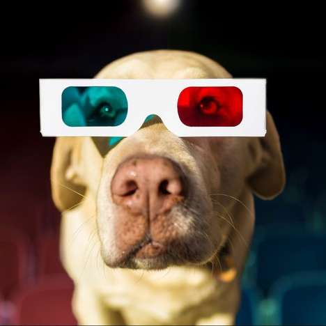 Canine-Friendly Theaters