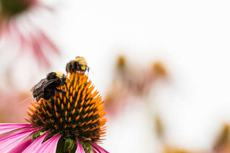 Bee-Powered Tech Platforms - The University of Washington is Using Bees for a Wireless Platform