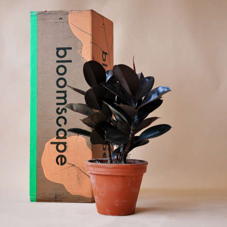 D2C Houseplant Start-Ups - Bloomscape Conveniently Delivers Plants Across the US in Boxes