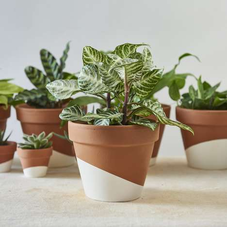 Whole-Home Houseplant Sets