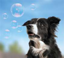 Fetch A Bubble - Chicken Scented Bubbles For Your Dog
