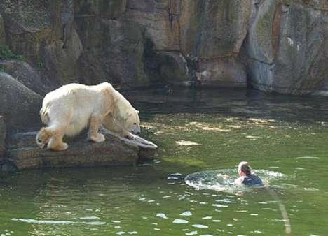 Swimming With Polar Bears